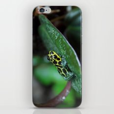 Poison Dart Frog R. Imitator Male iPhone & iPod Skin