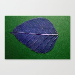 Life Lines * Blue Green * Thailand Bodhi Leaf Skeletons * Fine Art Print  Canvas Print