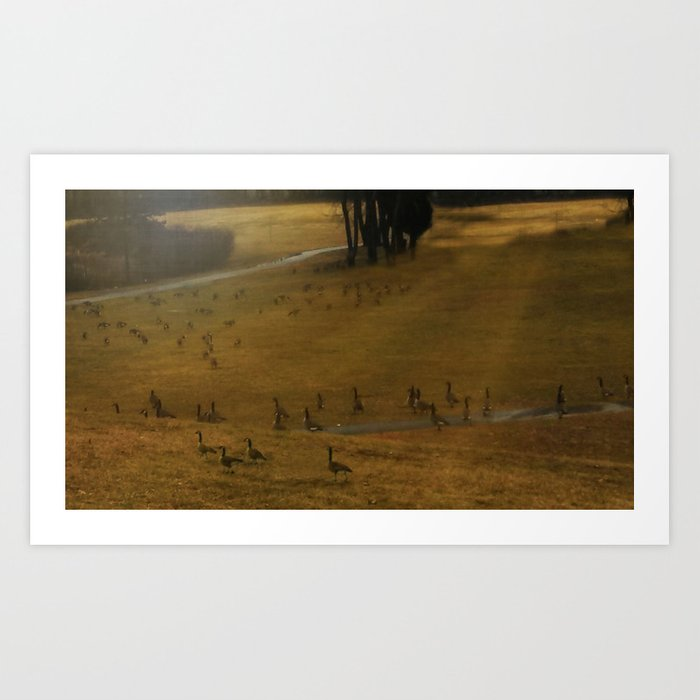 Migration - Nature Art Print