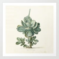 succulent Art Prints featuring Succulent by anipani