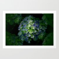 hydrangea Art Prints featuring Hydrangea by Sartoris ART