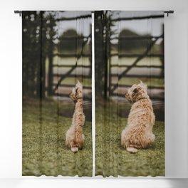Cute Puppy by Annie Spratt Blackout Curtain