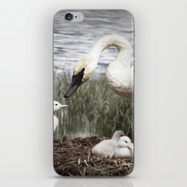 Tom Feiler Swan and her Cygnets iPhone Skin