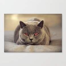 Superstar Diesel the Cat ! Canvas Print