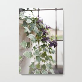 Trailing Ivy Metal Print