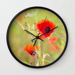 Tender shot of red poppies Wall Clock