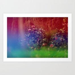 Flowers in Film, II Art Print