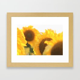 Sun Framed Art Print