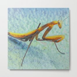 Praying Mantis I Metal Print