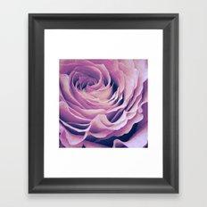 Le pétale de rose pourpre Framed Art Print