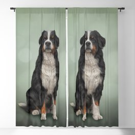 Bernese Mountain Dog. Drawing Blackout Curtain
