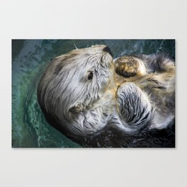 Swimming Sea Otter Canvas Print