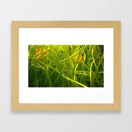 acvarium - green calm Framed Art Print