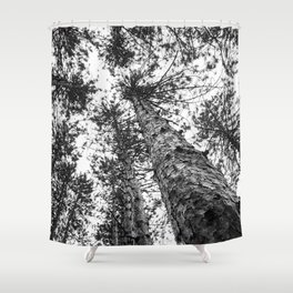 Way Up High   Tall Trees   Landscape Photography   Nature   Forest Shower Curtain