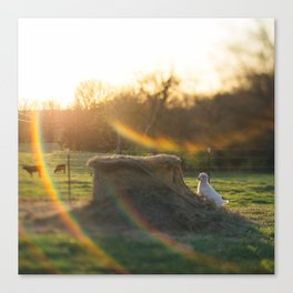 A Kid with Flare Canvas Print