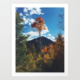 Fall Change Art Print