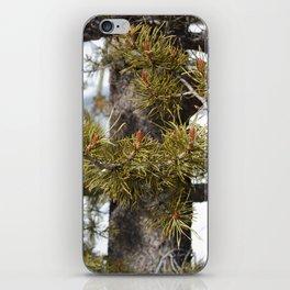 Winter Pine iPhone Skin
