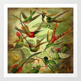 HUMMINGBIRD COLLAGE- Ernst Haeckel Art Print