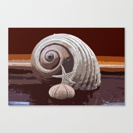 seashells 2 Canvas Print