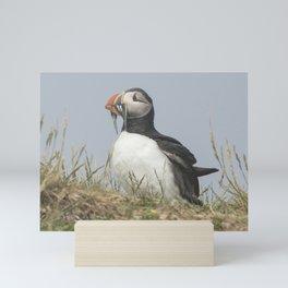 Atlantic puffin bird with a catch of fish Mini Art Print