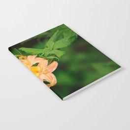 Beautful Trio Notebook
