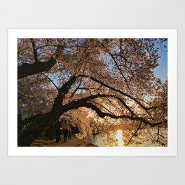 Cherry Blossoms at the Tidal Basin Art Print