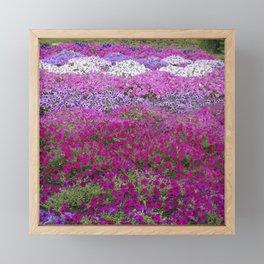Waves of color on a sea of Petunias Framed Mini Art Print