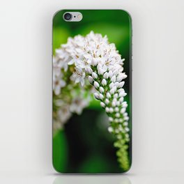 Spring has Bloomed iPhone Skin
