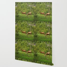 Wapiti In Yellowstone N P Wallpaper