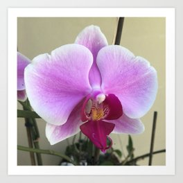 spring orchid Art Print