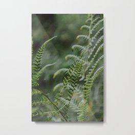Fern - green plants Utrecht - nature fine art photography Metal Print