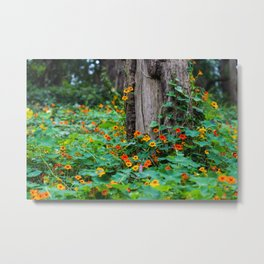 Stern Grove Flowers Metal Print