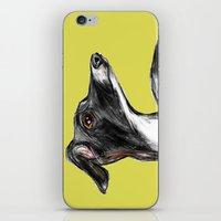 greyhound iPhone & iPod Skins featuring Greyhound by James Peart