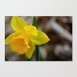 spring! Canvas Print