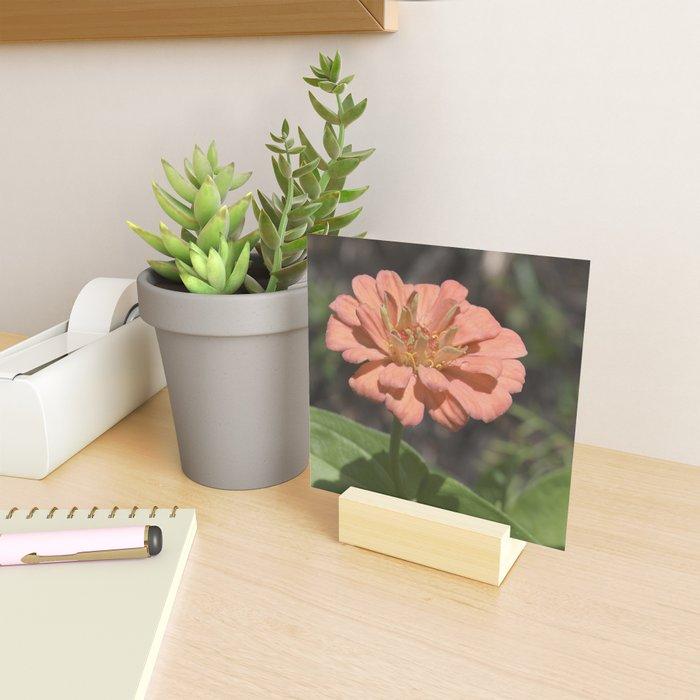Jane's Garden - The Peachy Orange Flower Mini Art Print
