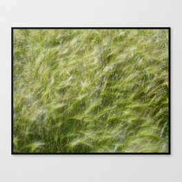 Flow of the Grasses Canvas Print