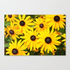 Blackeyed Susans Canvas Print
