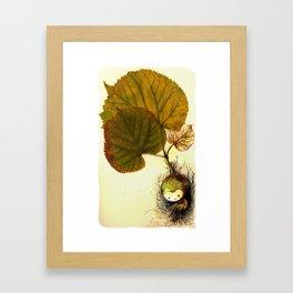 Mandragora Framed Art Print