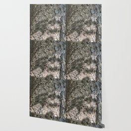 Sycamore Tree Bark Wallpaper