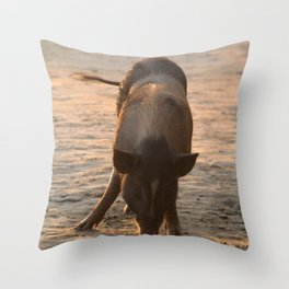 Piggy on the Beach Throw Pillow