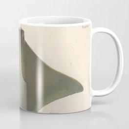 Vintage Stingray Illustration (1863) Coffee Mug