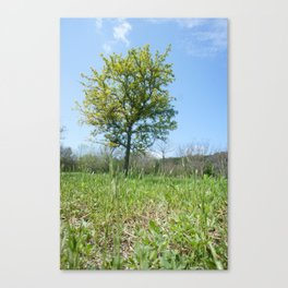 Ant's Eye Canvas Print
