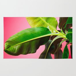 Banana Palm on Pink Rug