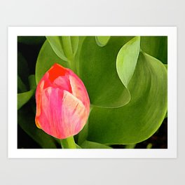 Joyful Tulip Art Print
