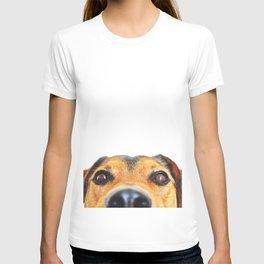 Peeking jack russel T-shirt