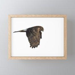 Northern Harrier Hunting, No. 4 Framed Mini Art Print
