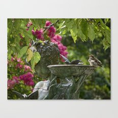 Sparrow at Bath Canvas Print