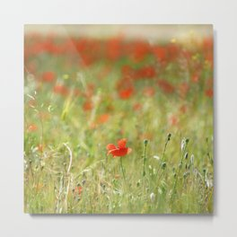 the first poppy of the field Metal Print