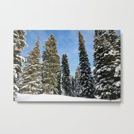 Targhee Trees Metal Print