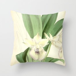Cochleanthes marginata (as Warczewiczella velata, spelled Warscewizella velata) Curtis' 92 (Ser. 3 Throw Pillow